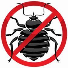 Bug Management